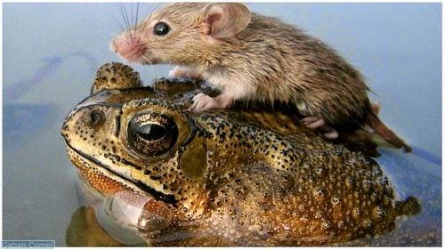 Jom Kita Lihat Foto Haiwan Menyelamatkan Diri Dari Banjir . - Gaban Comel