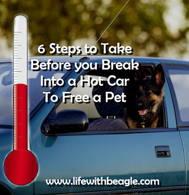 Don't break into a hot car to save a dog until you take these steps