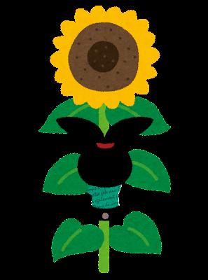 向日葵と ぴょこ のイラスト