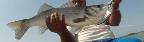 pencil poppers for bass bluefish bonitos mackerel