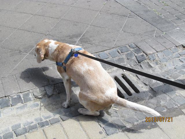Az okos kutyák csatornába pisilnek