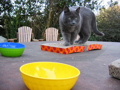 Beorn the cat and his food bowls