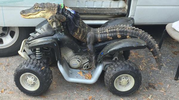 Dân chơi cá sấu mặc quần áo ngồi xe mô tô chất lừ