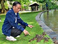 Innalillahi, Ribuan Kodok Pak Jokowi Mati Diterkam Biawak