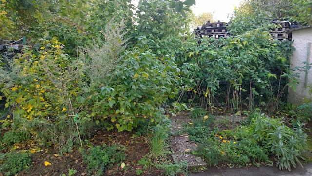 Gemüsebeet Ende Oktober mit Gründünger, Mulch und Gemüsepflanzen (c) by Joachim Wenk