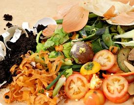 sampah organik dan manfaatnya untuk manusia