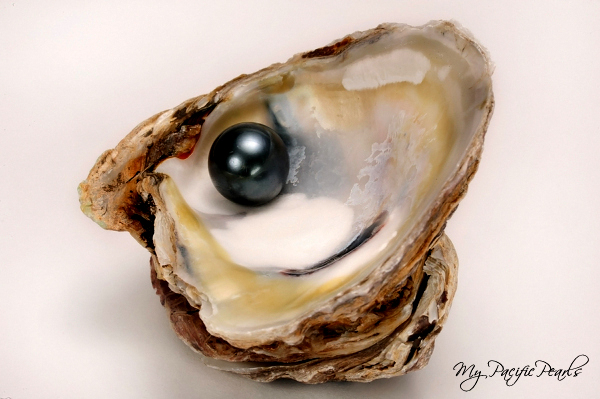 Amusing black oyster pearl think, that