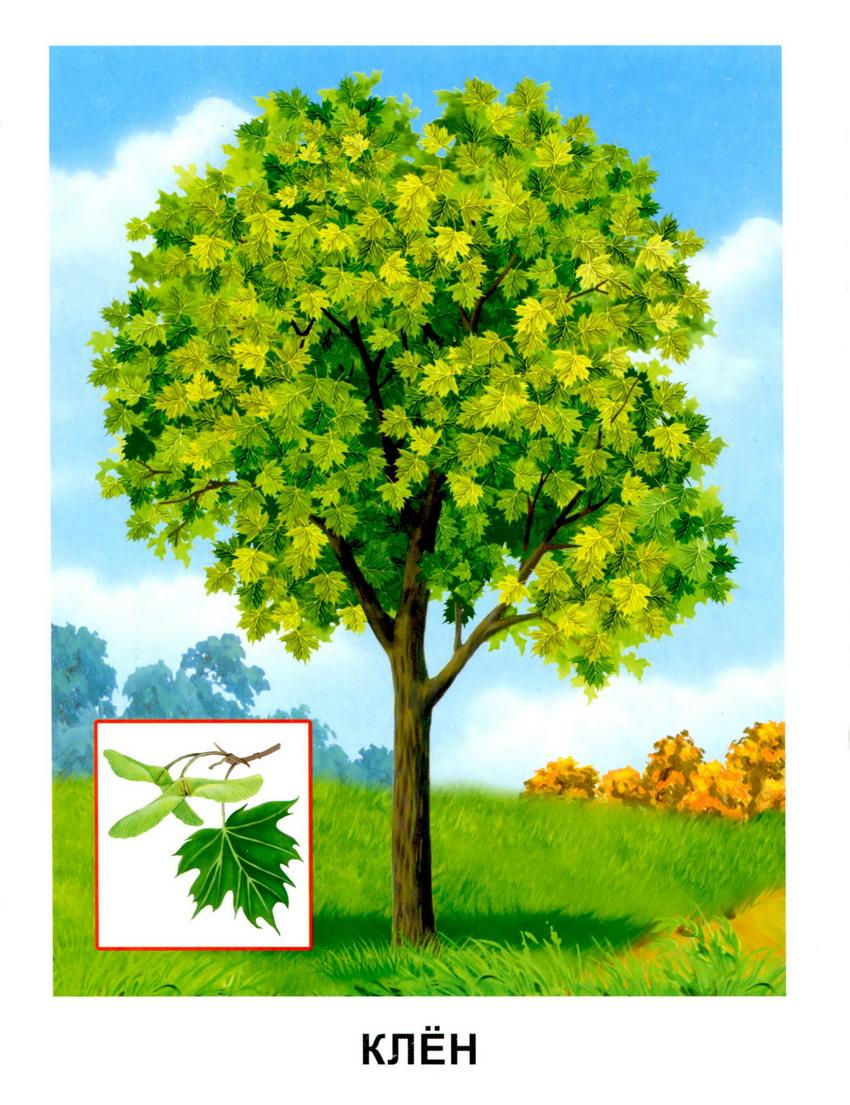 картинки с деревьями для доу много израильских солдат