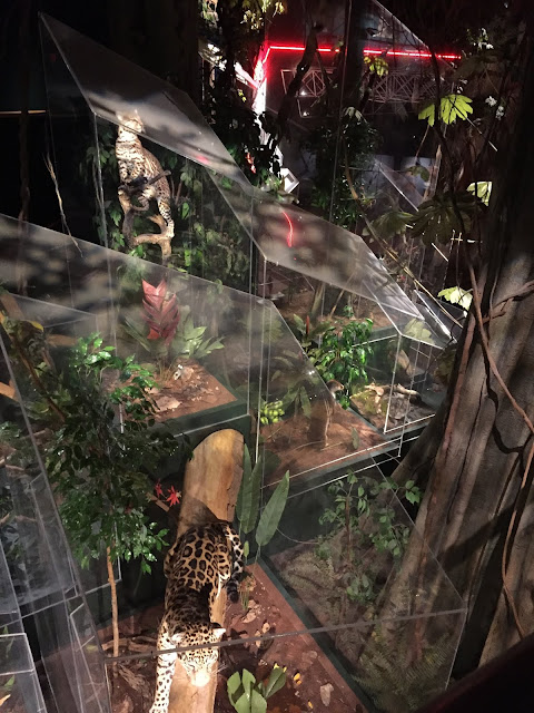 Exploring the levels of the rainforest at the Milwaukee Public Museum.