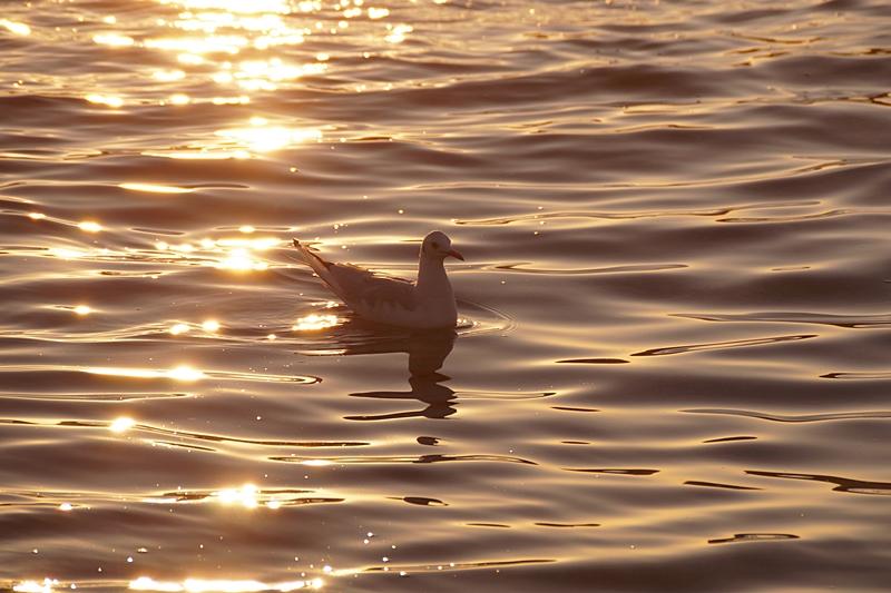 Möwe in Kroatien [Meer, Strand, Sonnenuntergang, Sonne, Abend, Sommer]