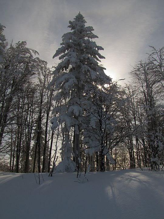 Słońce za drzewami.