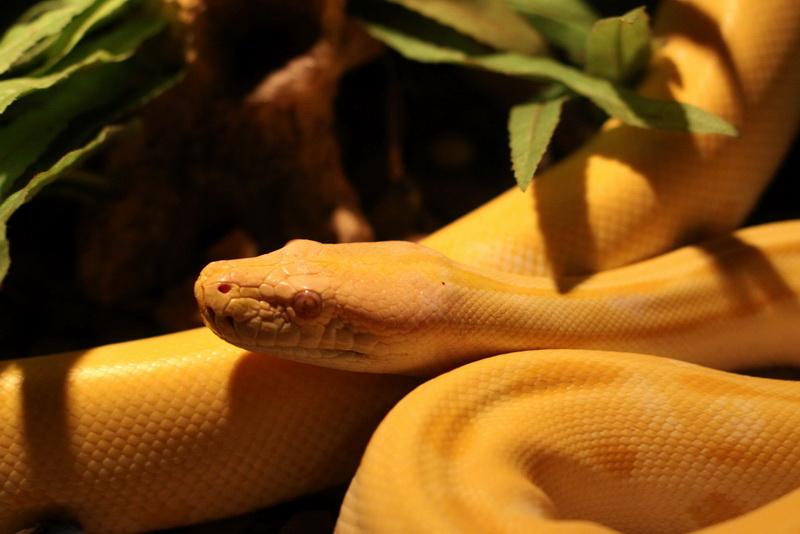 Спокойная змея