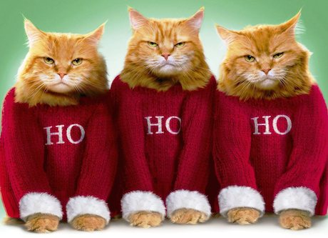 Kitten Christmas Sweater.Gafunkyfarmhouse This N That Thursdays Ugly Christmas