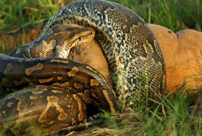 Βίντεο που κόβει την ανάσα: Οι δέκα πιο θανατηφόρες μάχες άγριων ζώων που έχουν καταγραφεί σε κάμερα!