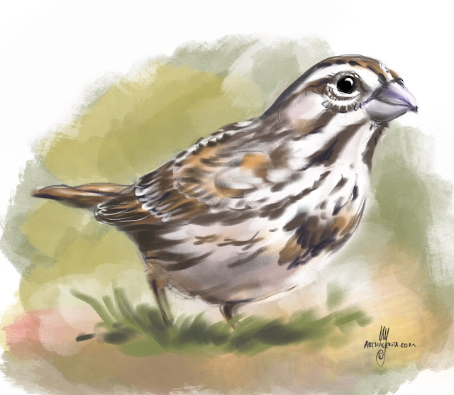 Song Sparrow bird painting by Artmagenta