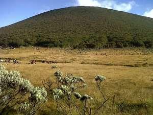 Paket Wisata Gunung Gede Pangrango, Operator Terbaik