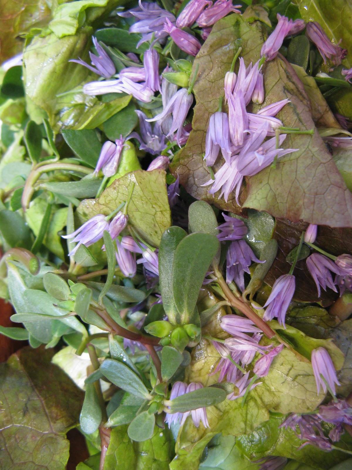 Growing Purslane How To Grow Edible Purslane In The Garden: WendyKate: Salads With Purslane