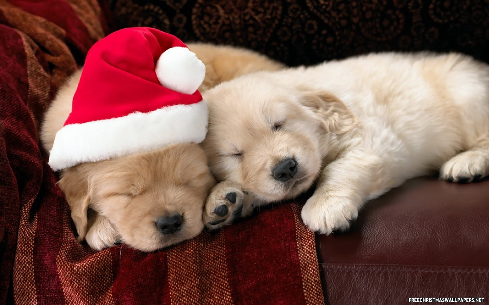 Funny wallpapers|HD wallpapers: cute christmas dogs