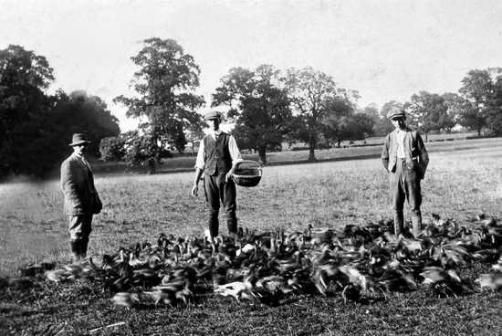 Photograph of Gamekeepers, Brookmans 1904