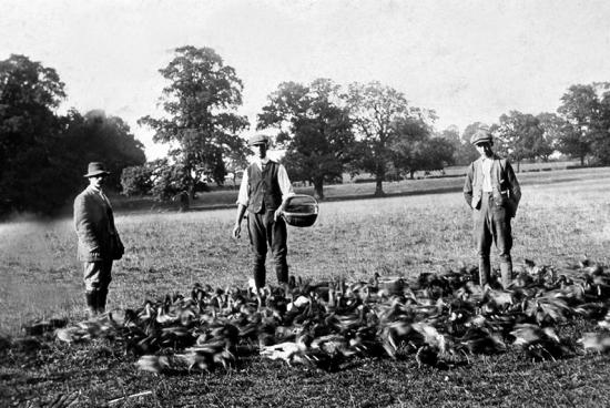 Photograph of Gamekeepers, Brookmans 1904