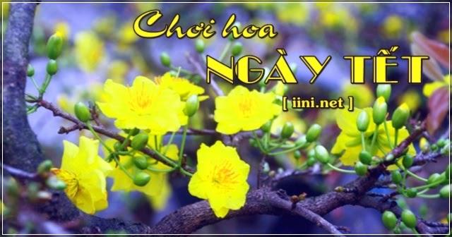Chùm thơ tâm trạng của người chơi hoa Xuân, cây kiểng ngày Tết