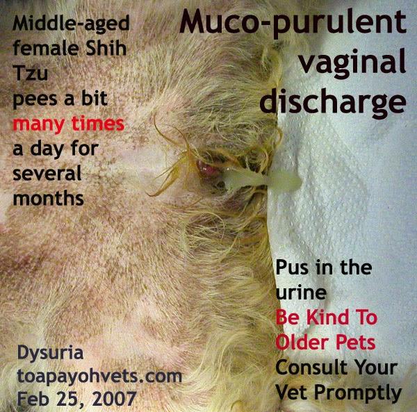 female dog yellow discharge