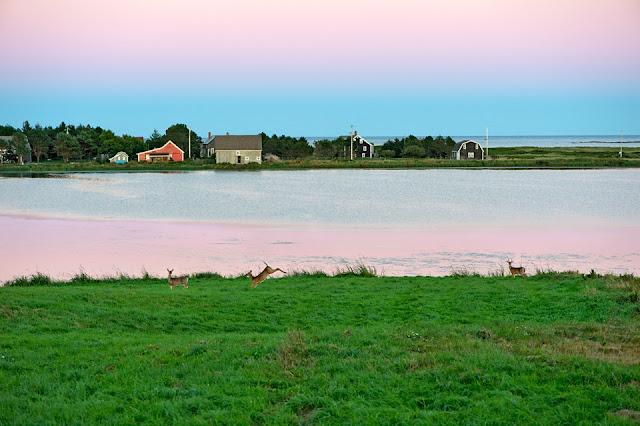 Nova Scotia; Deer