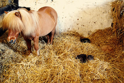 Pony and cats - Willows Animal Sanctuary Strichen