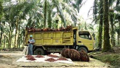 Penggunaan Teknologi di Perkebunan Kelapa Sawit