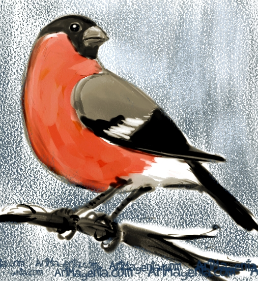 Bullfinch is a bird drawing by Artmagenta
