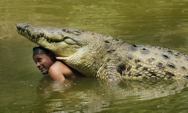 manusia bersahabat dengan hewan buas buaya