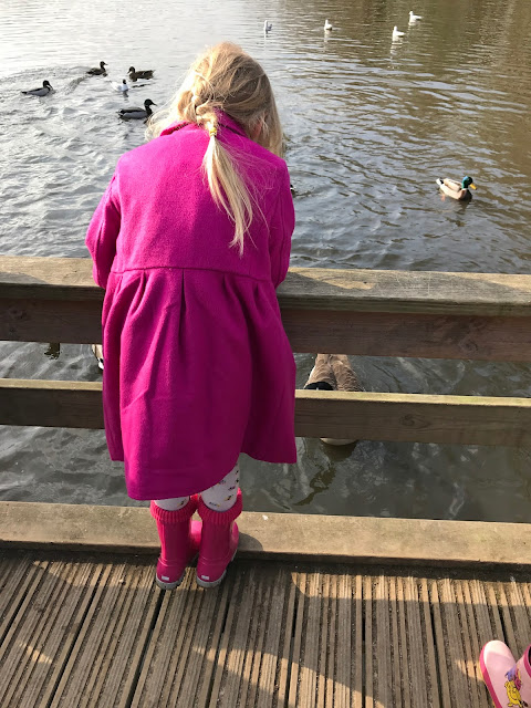 A 5 year old girl leaning over a fence overlooking a duck pond looking at the ducks