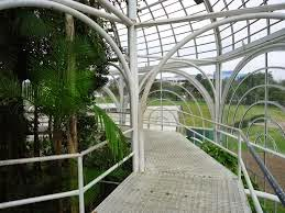 Estufa (por dentro) Jardim Botânico - Curitiba