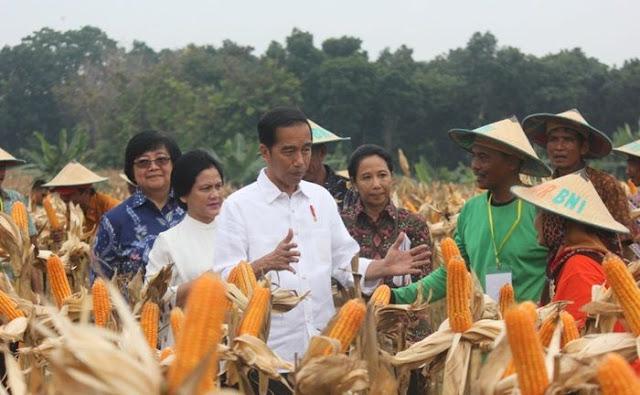 Kementan Catat Jagung Surplus 12,98 Juta Ton, Kok Mau Ada Impor?