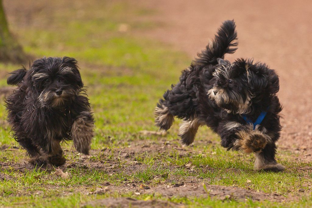 2 running puppys of 16 weeks