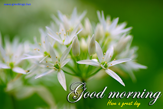 good morning wishes. have a great day. white flowers