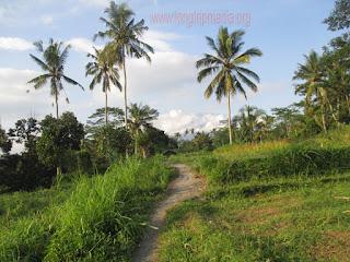 Tempat Wisata Air Terjun Tangkub (Slau) Bangli