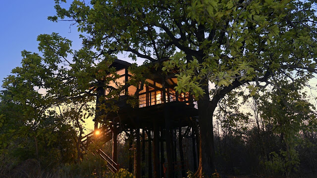 Pench national park tree lodge best price