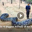 World's 10 Biggest Animals Of All Times | olahola videos