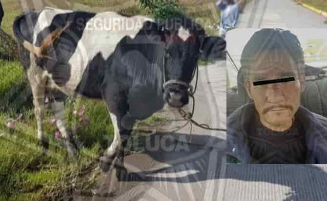 Ganado, animales, toro