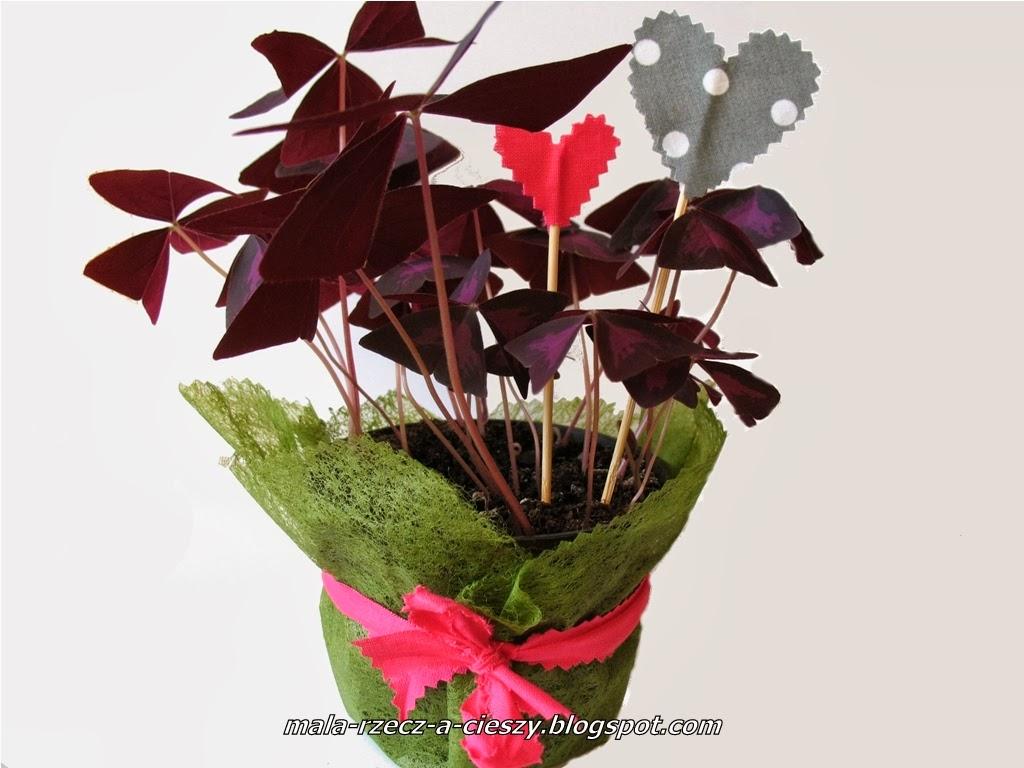 Dzień kobiet! Jak własnoręcznie ozdobić kwiaty doniczkowe na prezent?