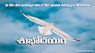 Telugu good morning images Beautiful sky, flying white bird name seagull