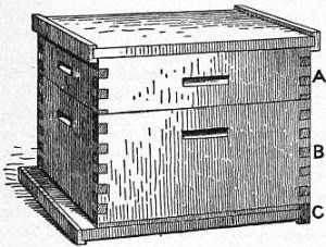 1911-Britannica-Bee-Langstroth-Hive.jpg