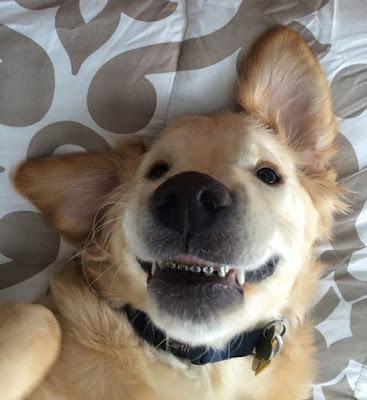 Σκύλος σιδεράκια