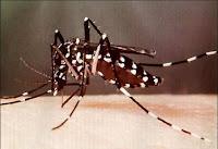 Picaduras del verano, Mosquito Tigre, Farmacia Torres, Abierta 24h, Aribau 62, Barcelona