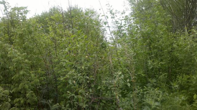 Густая растительность