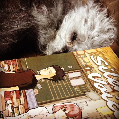 Murchie, still asleep, curls up just behind a paperback copy of A Silent Voice volume one. Its cover features a Japanese boy and girl standing in an otherwise empty classroom. The boy looks distinctly nervous, while the girl has a welcoming expression on her face.