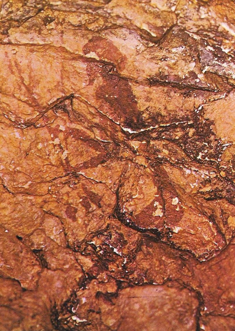 El Portal Xama: Arte Prehistórico