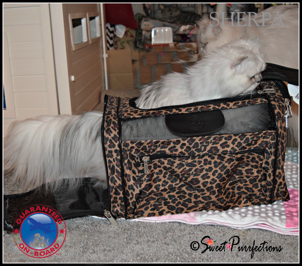 Truffle demonstrates bot the top and side entries of the Sherpa® Cat Tote