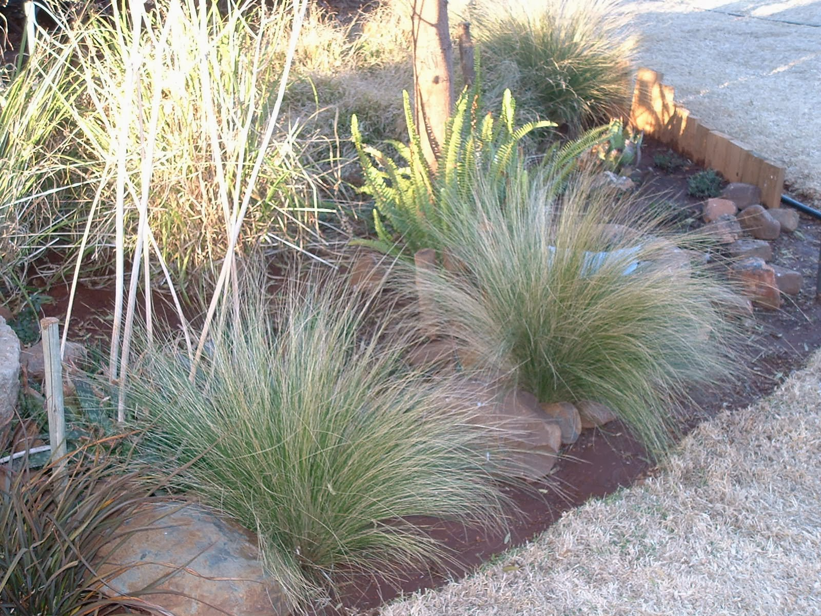 Gardening in africa ornamental grasses in the garden for Planting plans with grasses